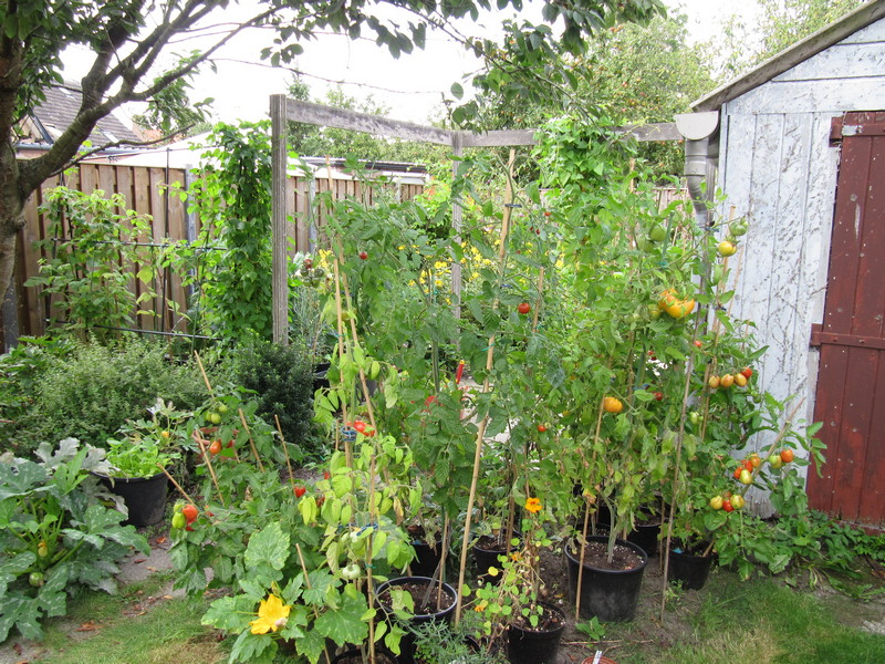 september moestuin en tomaten 9sep